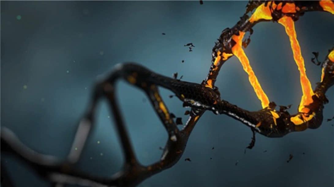 DNA revealed
